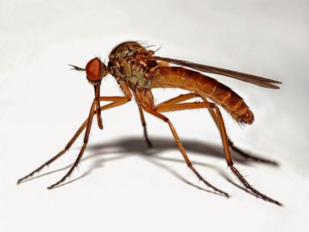Sivrisinekler sadece sizi mi ısırıyor? - Page 2