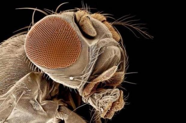 Sivrisinekler sadece sizi mi ısırıyor? - Page 3