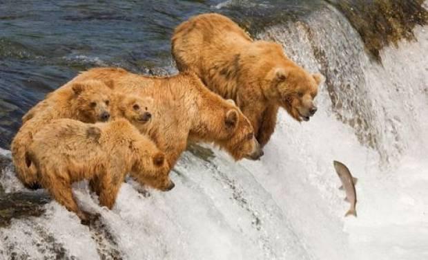 Son 10 yılın en iyi hayvan fotoğrafları! - Page 2