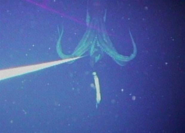 Su altında çekilmiş inanılmaz kareler - Page 1