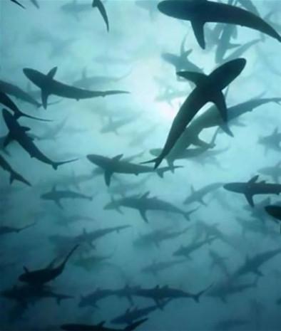 Su altında çekilmiş inanılmaz kareler - Page 3