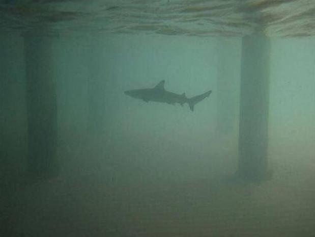 Su altında çekilmiş inanılmaz kareler - Page 4