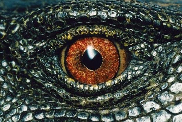 Tabiatın gözleri: 17 hayvanın gözlerine yakından bakış - Page 1