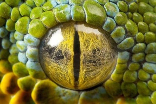 Tabiatın gözleri: 17 hayvanın gözlerine yakından bakış - Page 2