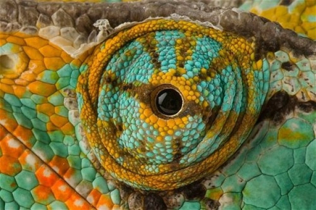 Tabiatın gözleri: 17 hayvanın gözlerine yakından bakış - Page 3