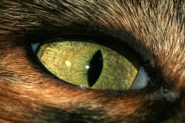 Tabiatın gözleri: 17 hayvanın gözlerine yakından bakış - Page 4