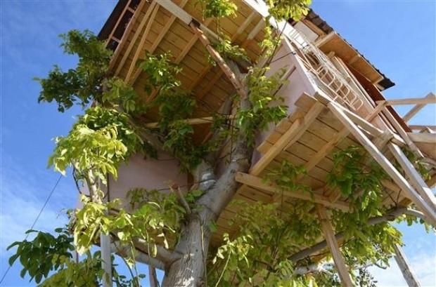 Malatya'da ceviz ağacının üzerine ev yapıldı! - Page 2