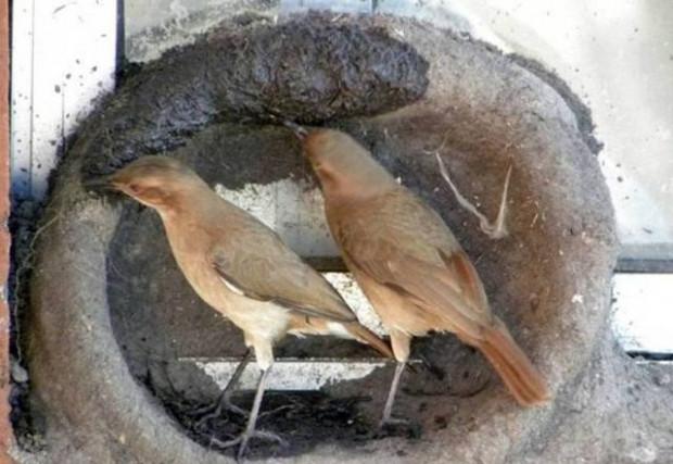 Tık rekoru kıran Kuşların mühendislik harikası - Page 3