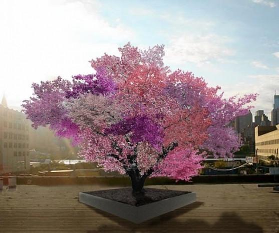 Tüm meyveler tek ağaçta yetişecek! - Page 4