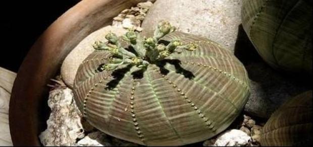 Türkiye'deki bilinmeyen 7 ilginç bitki - Page 2