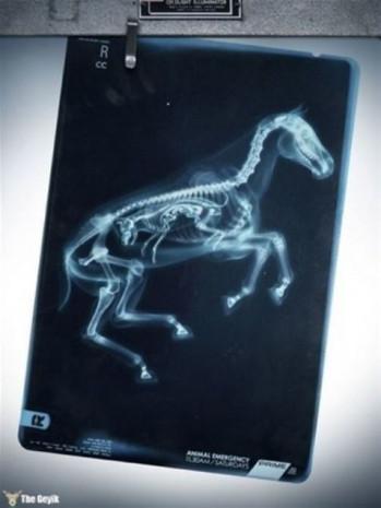 Ultrasonu çekilen hayvanların görüntüleri - Page 2