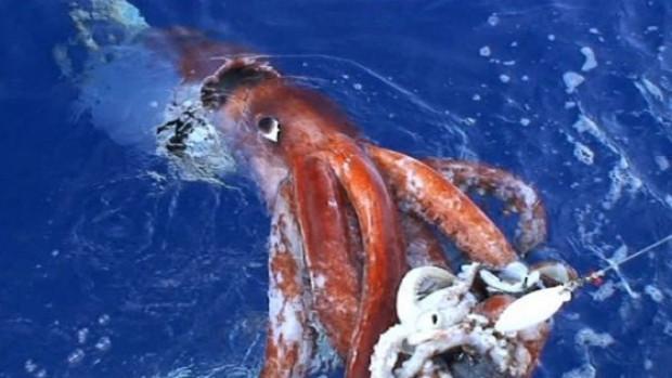 Ürkütücü deniz canlıları - Page 3