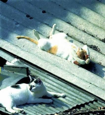 İşte uyuyan kediler! - Page 2