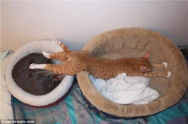 İşte uyuyan kediler! - Page 3