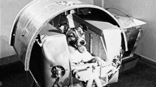 Uzaya yollanan hayvanlar - Page 1