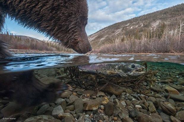 Vahşi doğadan harika 33 fotoğraf - Page 1