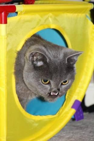 Vampir kedi görenleri hayrete düşürüyor! - Page 4