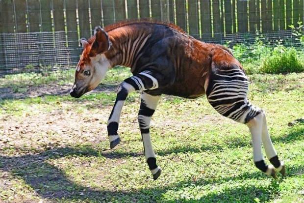 Var olduğuna inanamayacağınız 10 garip hayvan - Page 3