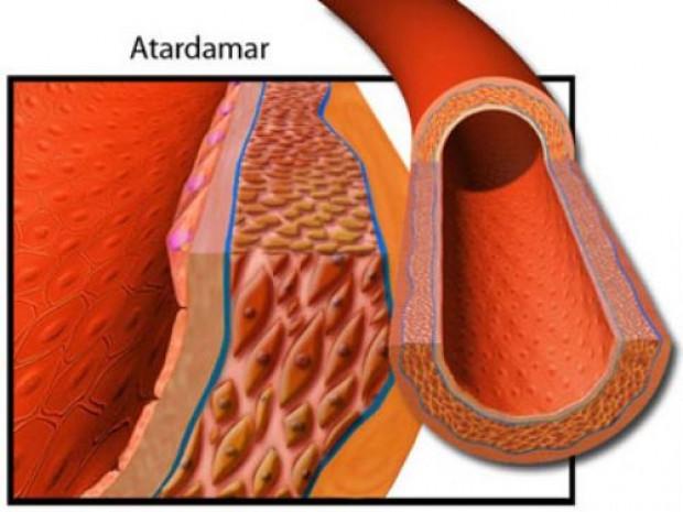 Vücudumuzun en önemli organı - Page 3