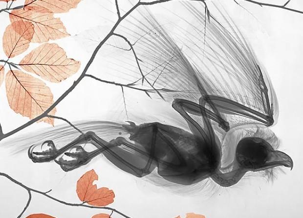 X-Ray cihazından doğa nasıl görünür? - Page 4