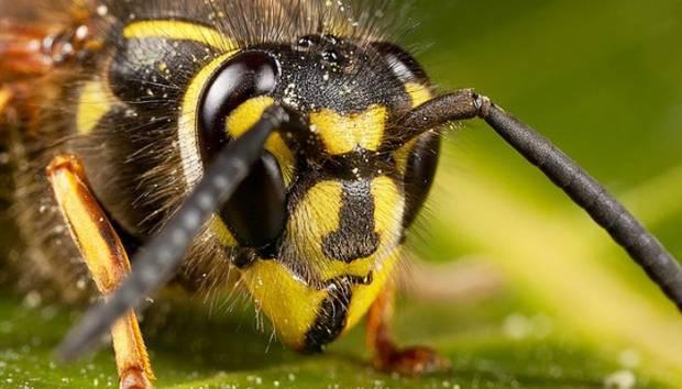 Yaban arıları sanılandan zekiymiş - Page 2