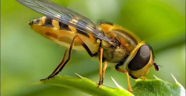Yaban arıları sanılandan zekiymiş - Page 4