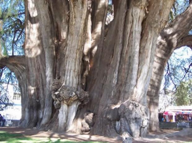 Yaradılış mucizesi ağaçlar! - Page 3