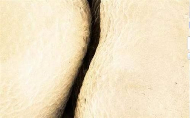 Yediğimiz yiyeceklerin mikroskobik görüntüleri - Page 1