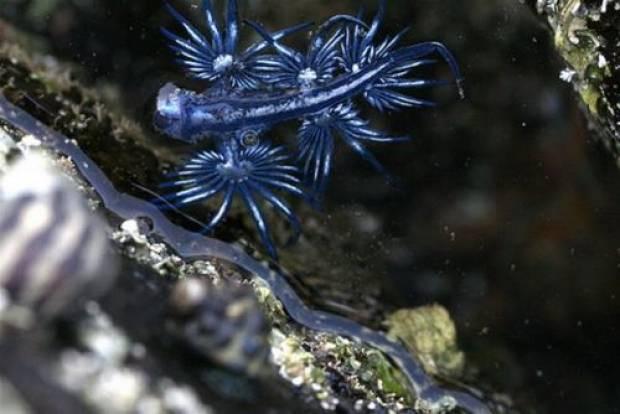 Yeni bir deniz canlısı daha bulundu! - Page 1