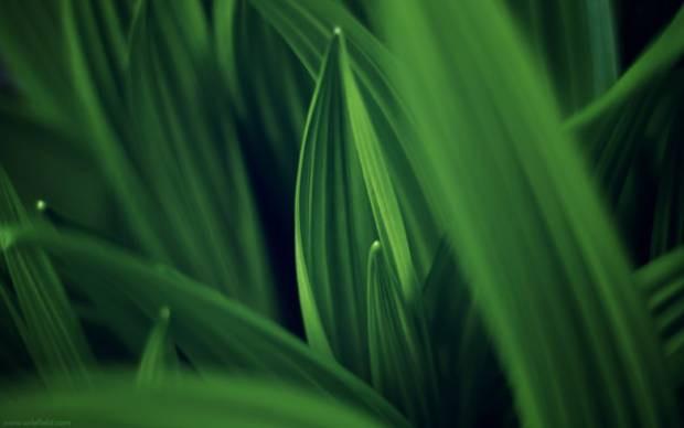 Yeşil manzara duvar kağıtları - Page 3