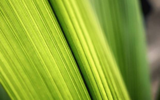 Yeşil manzara duvar kağıtları - Page 4
