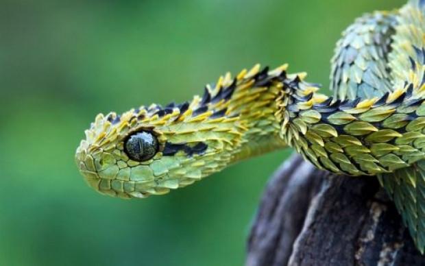 Yılanlar hakkındaki bu bilgileri duymuş muydunuz ? - Page 3
