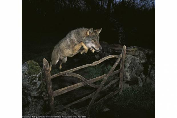 Yılın en iyi vahşi yaşam fotoğrafları! - Page 1