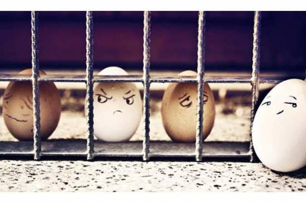 Yumurtaların çılgın dünyası! - Page 1