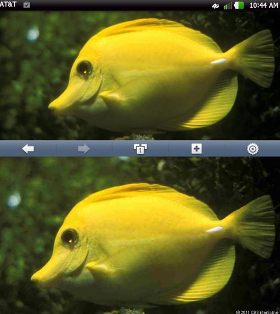 1332869209_nitrohdfishpicwgalaxynexus610x684.jpg