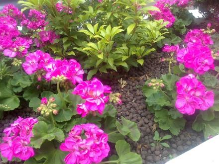1341253635_sony-xperia-u-camera-flowers-small.jpg