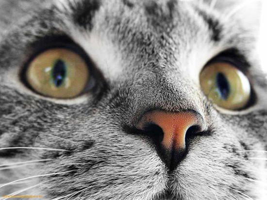 1342896798_perfect-face-cat-1.jpeg