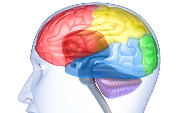 1349678976_google-brain-600.jpg