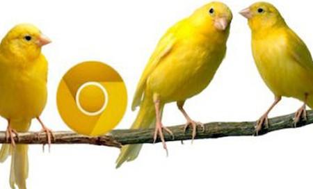 1352638622_google-chrome-canary-test-surumu-450x272.jpg
