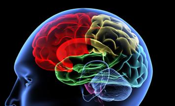 1361258561_brain-color.png