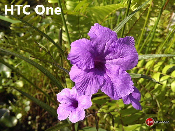 1361579606_htconeflowersc.jpg