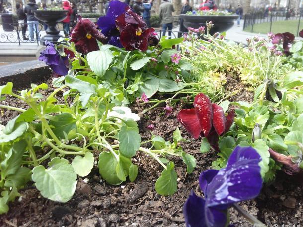 1364084238_alcatelautorityflowers610x458.jpg