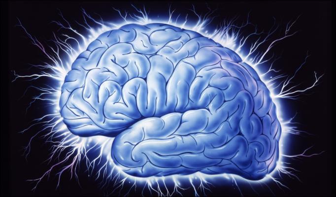 1374823503_beyin-sinir-sistemi-hareket-ve-bellek.jpg