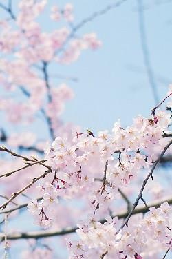 1407764113_flowersww-250.jpg