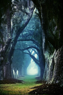 1407764493_treesww-250.jpg