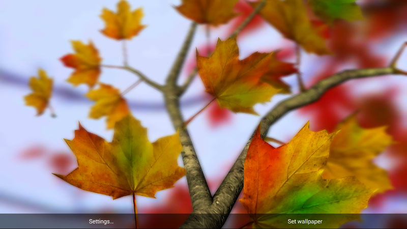 1413275506_autumn-leaves-hd-in-gyro-3d-parallax.jpg