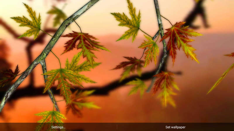 1413276556_autumn-leaves-hd-in-gyro-3d-parallax.jpg