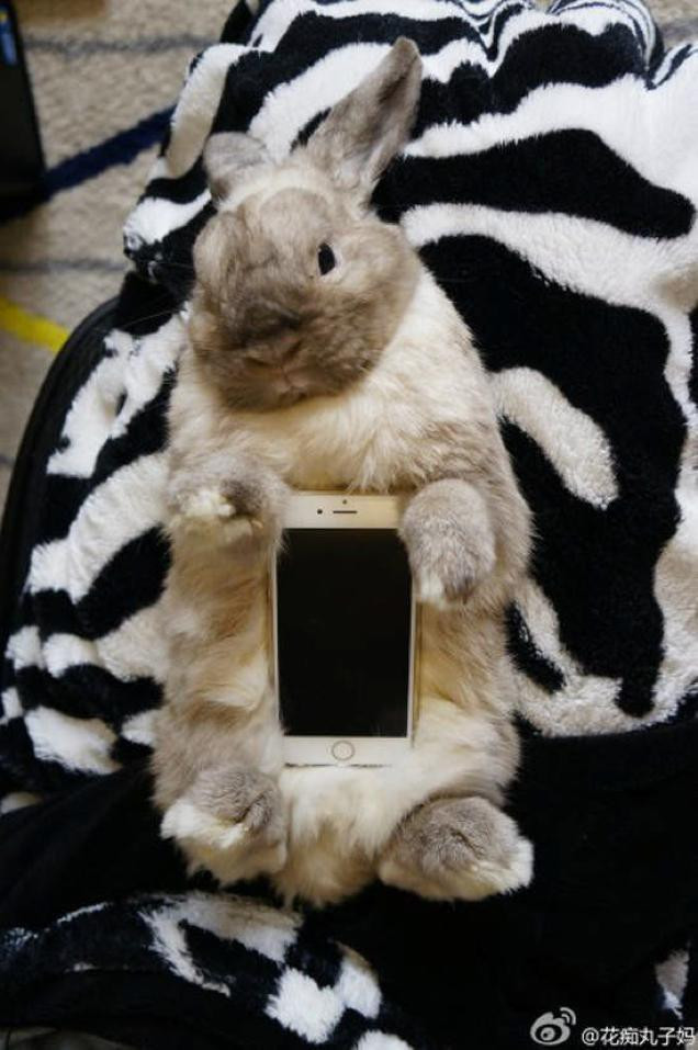 1414075968_live-animal-as-a-case-is-the-latest-craze-in-japan.jpg