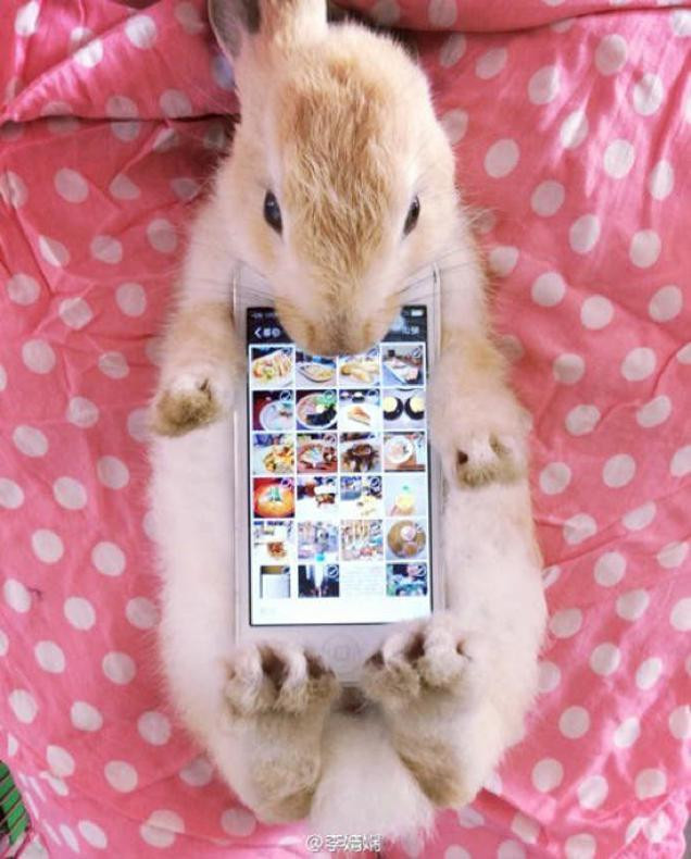 1414075975_live-animal-as-a-case-is-the-latest-craze-in-japan-1.jpg