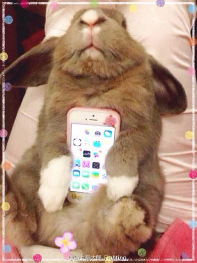 1414075986_live-animal-as-a-case-is-the-latest-craze-in-japan-3.jpg